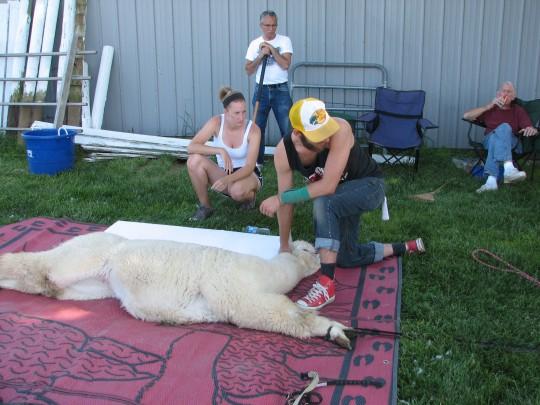 Shearing 3