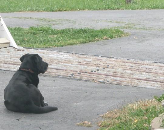 Shadow Waiting