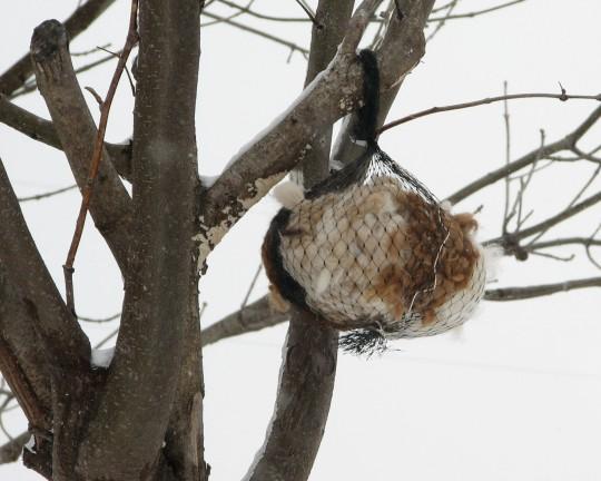 Hang in Tree