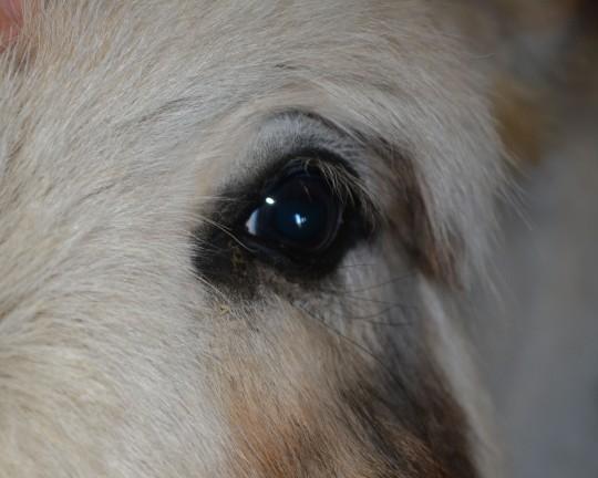 Jalapeno Closeup