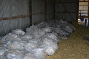 Shearing 2014_027