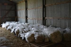 Shearing 2014_032