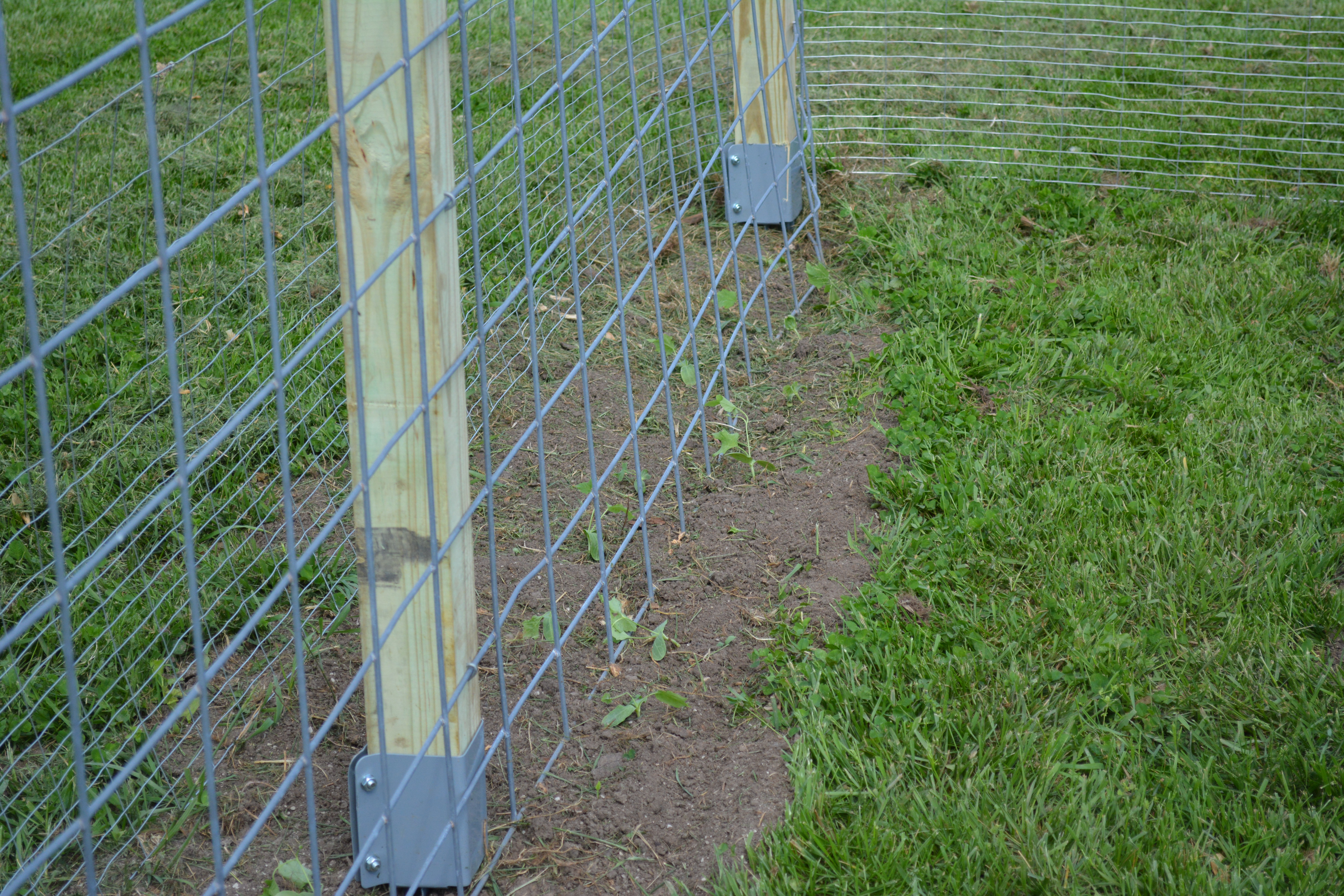 Image Result For Portable Dog Fence