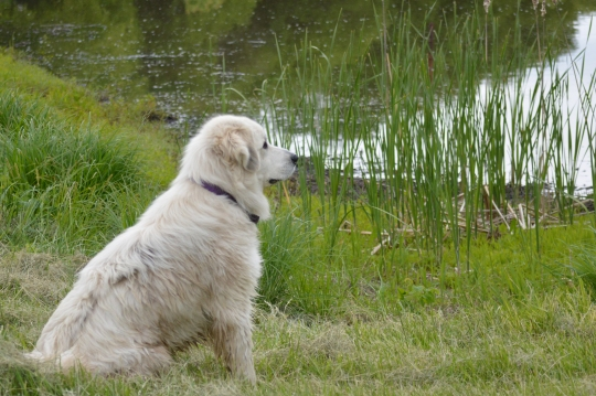 Bella at Pond 1