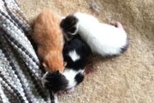 Kittens Day 3