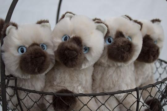 MOPACA Closeup Kittens